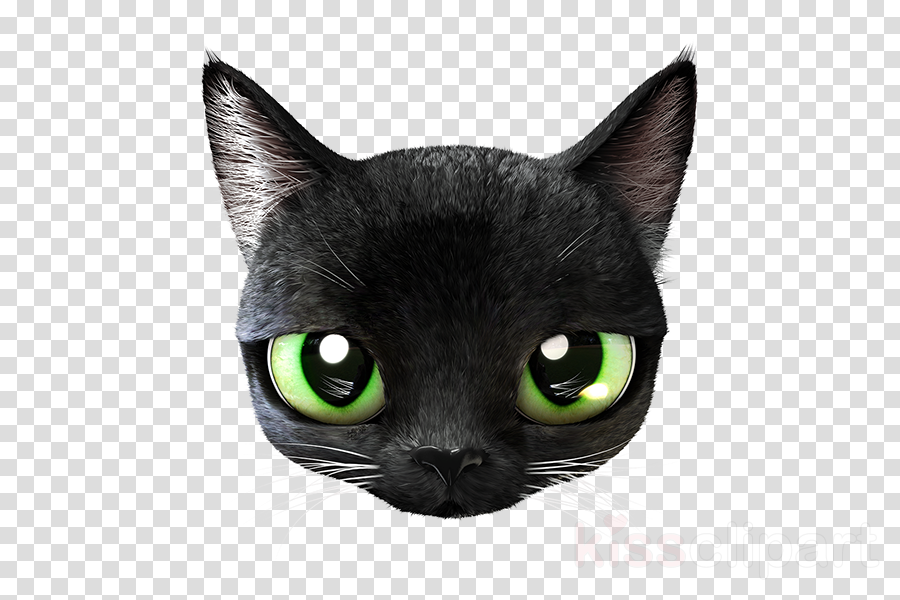 cat black cat small to medium-sized cats whiskers green