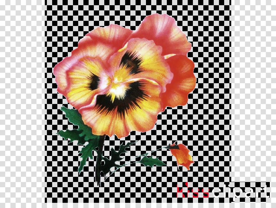 flower hawaiian hibiscus petal plant hibiscus