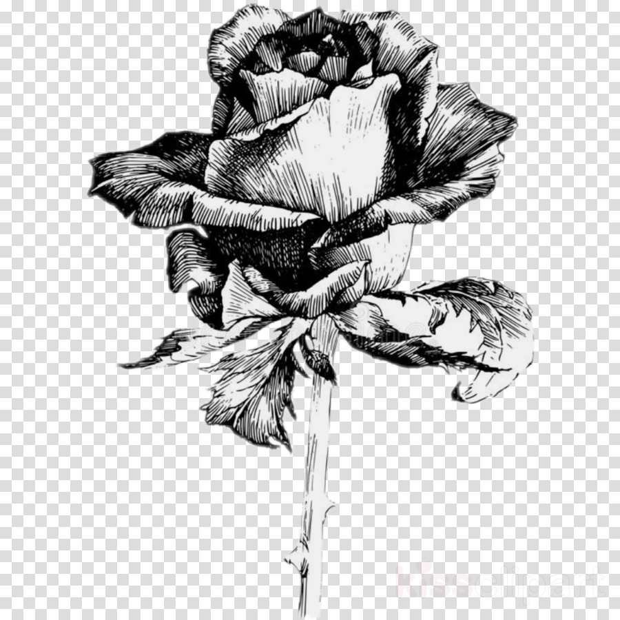 flower black-and-white plant sketch drawing