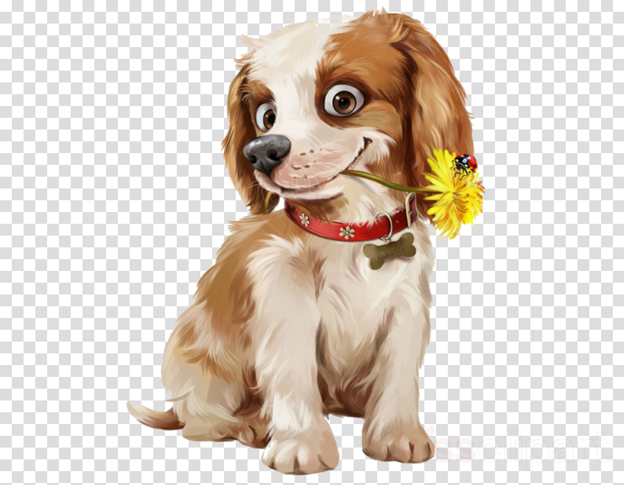 dog puppy companion dog spaniel king charles spaniel
