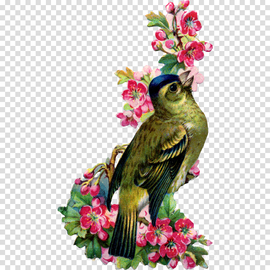 bird plant flower beak spring