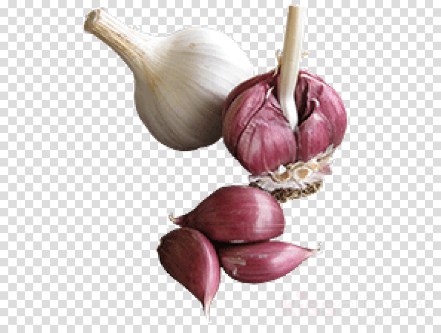 garlic elephant garlic vegetable shallot plant