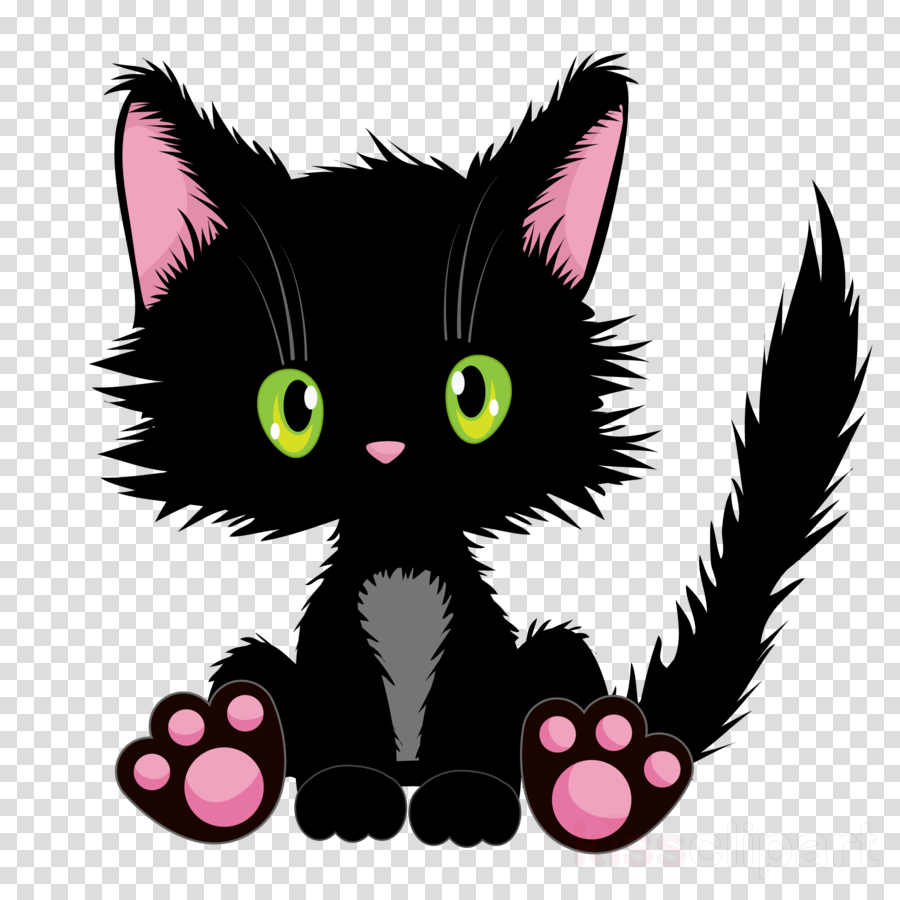 cat black cat small to medium-sized cats whiskers kitten