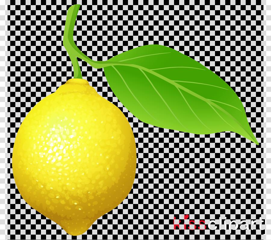 leaf plant lemon fruit citrus