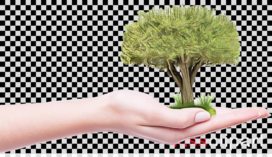 grass plant flowerpot tree hand