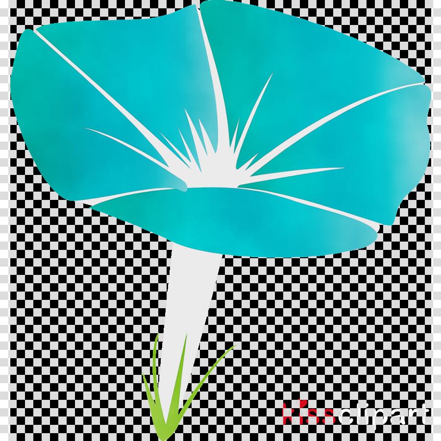 leaf turquoise plant flower morning glory