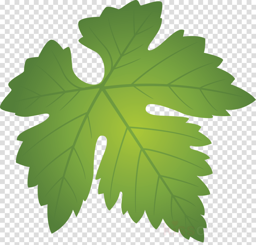 Grapes Leaf Leaf Clipart Leaf Green Grape Leaves Transparent Clip Art