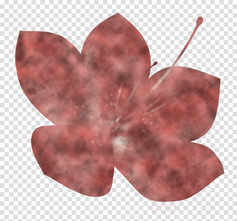 Azalea spring flower Azalea flower