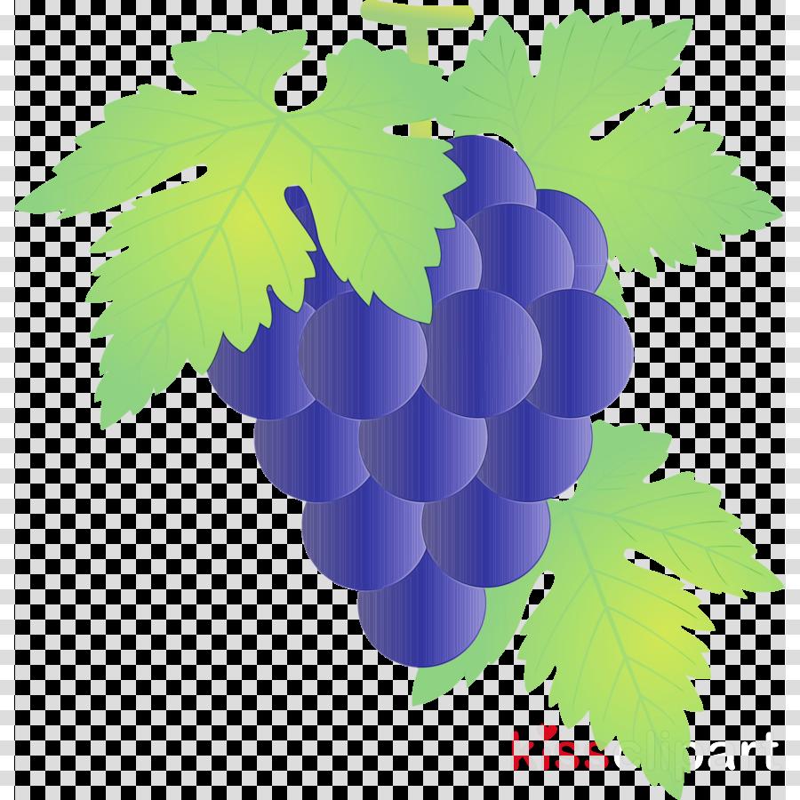 grape grape leaves leaf grapevine family seedless fruit