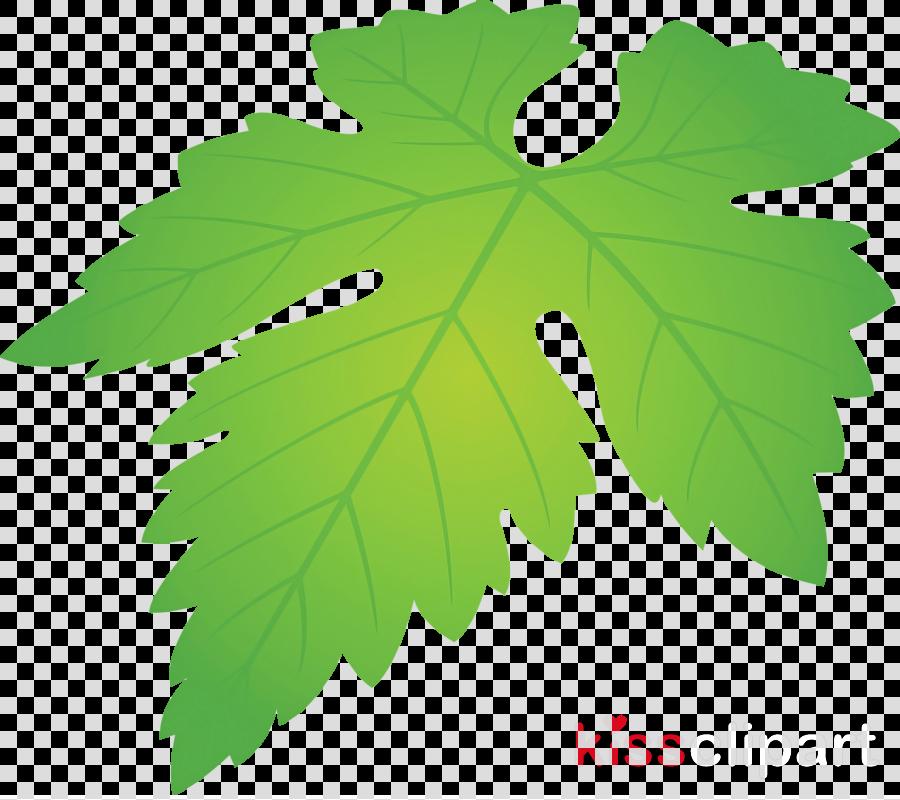 Grapes Leaf leaf