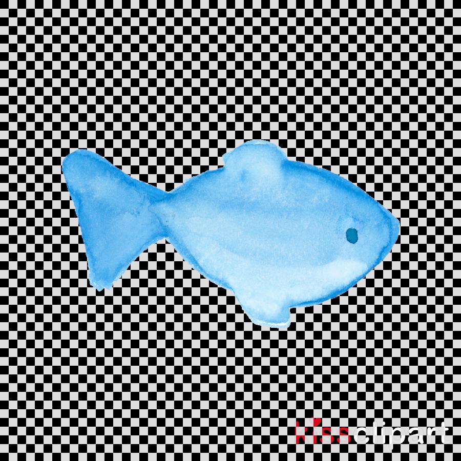 blue turquoise fish aqua fish
