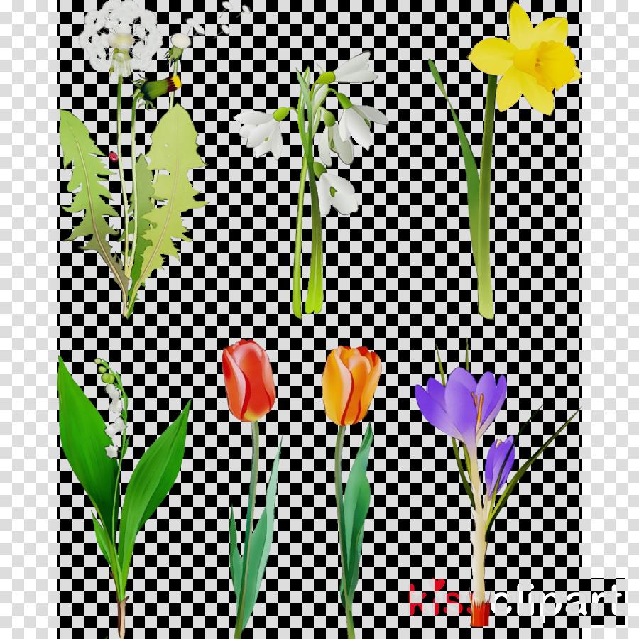 flower plant plant stem petal pedicel
