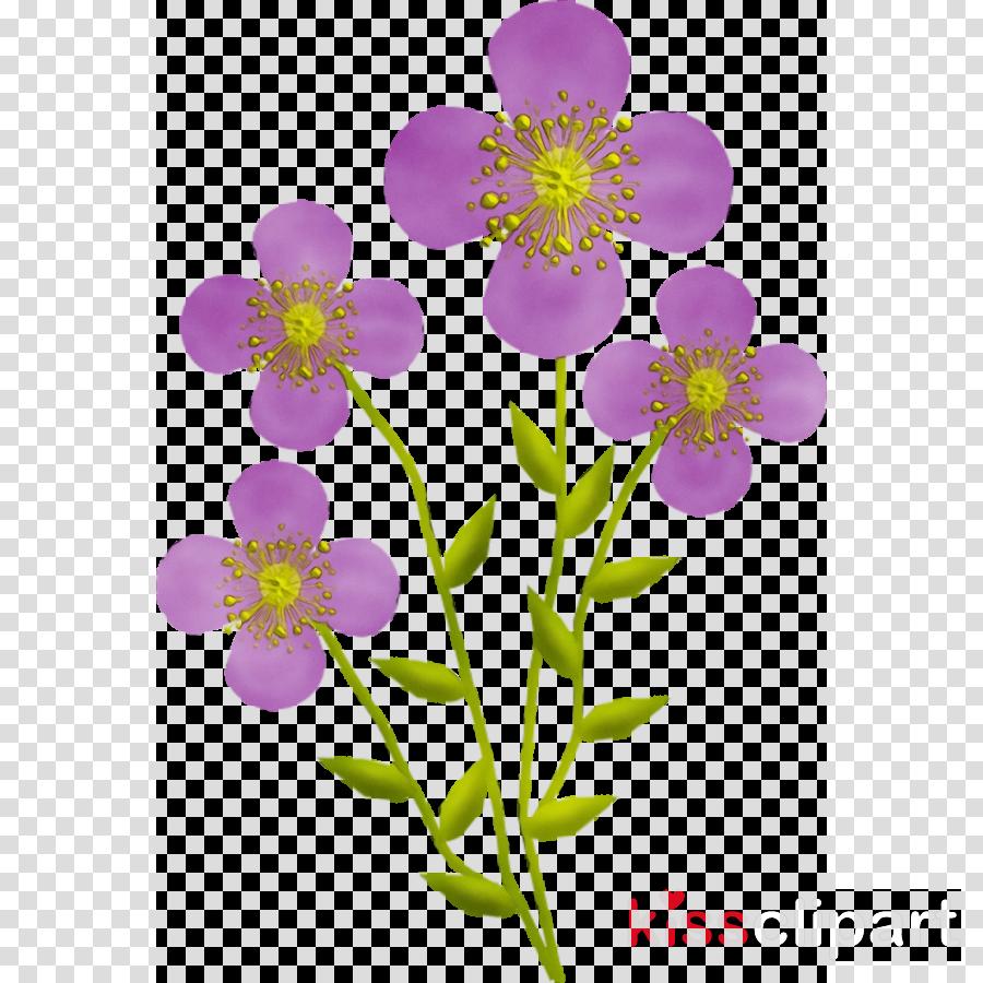 flower plant petal violet wildflower