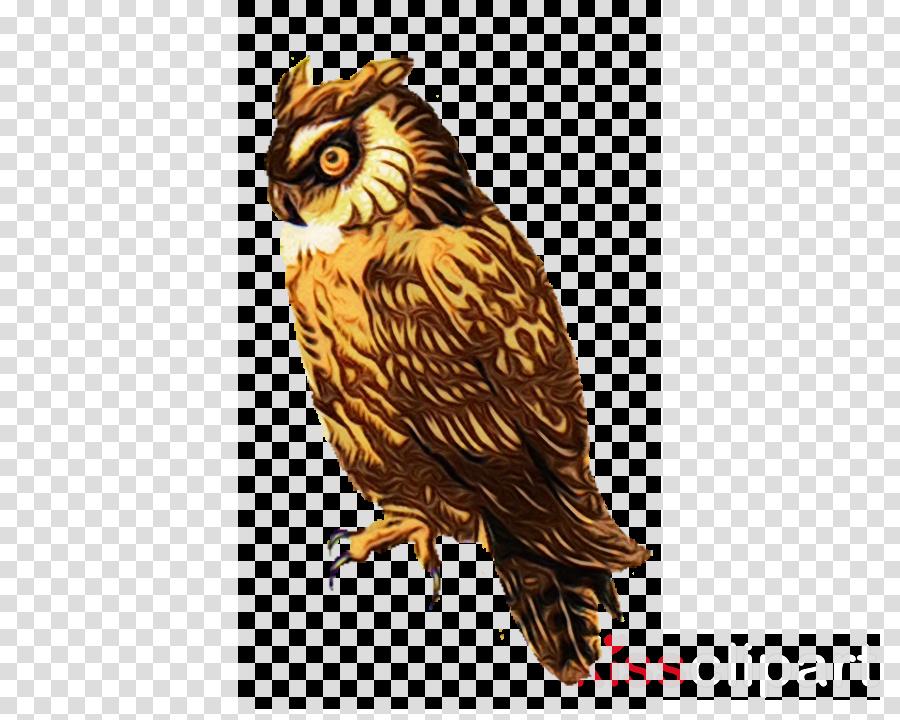 bird owl bird of prey beak falcon