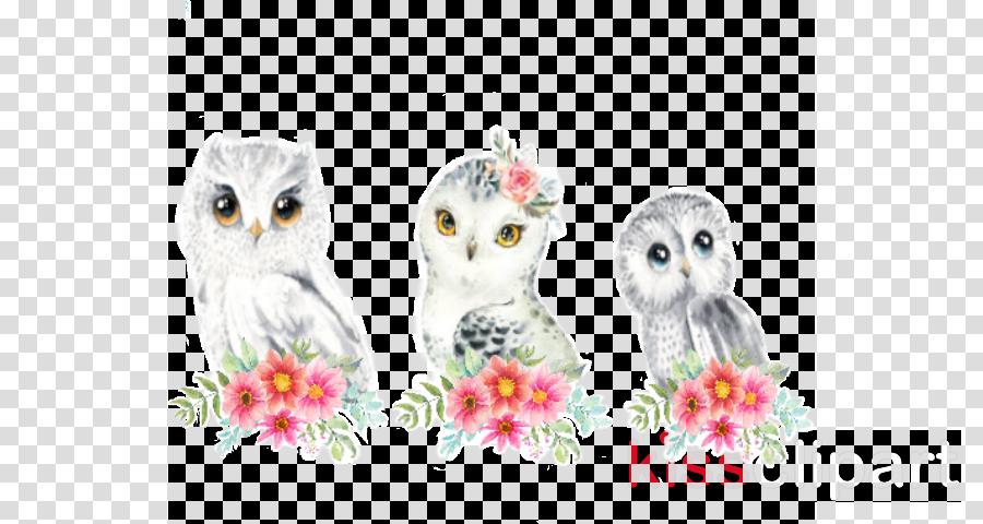 owl bird white bird of prey barn owl