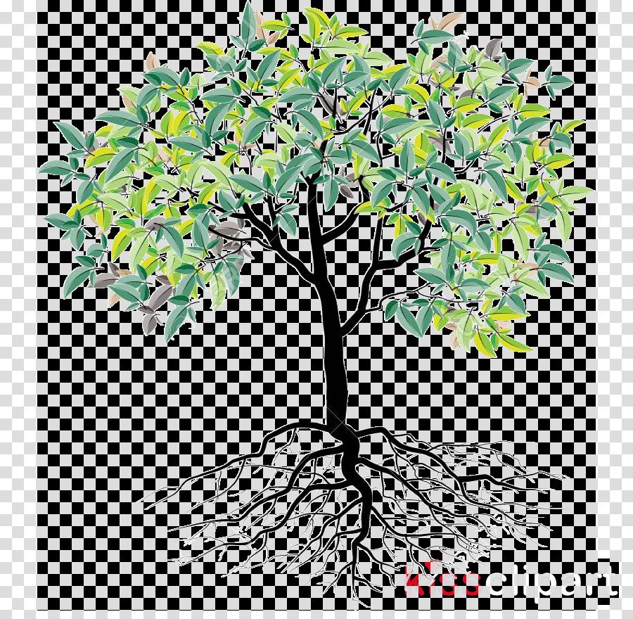 tree plant woody plant flower branch