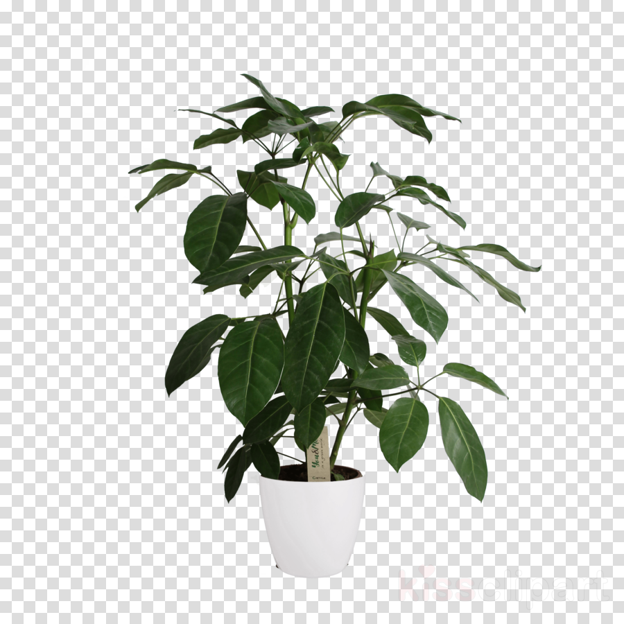 flower plant flowerpot leaf tree
