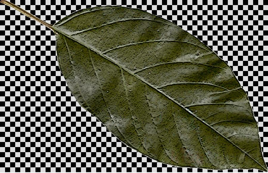 leaf plant tree flower sweet birch