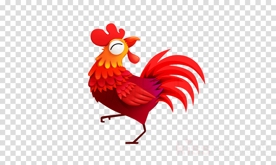 chicken rooster bird red comb