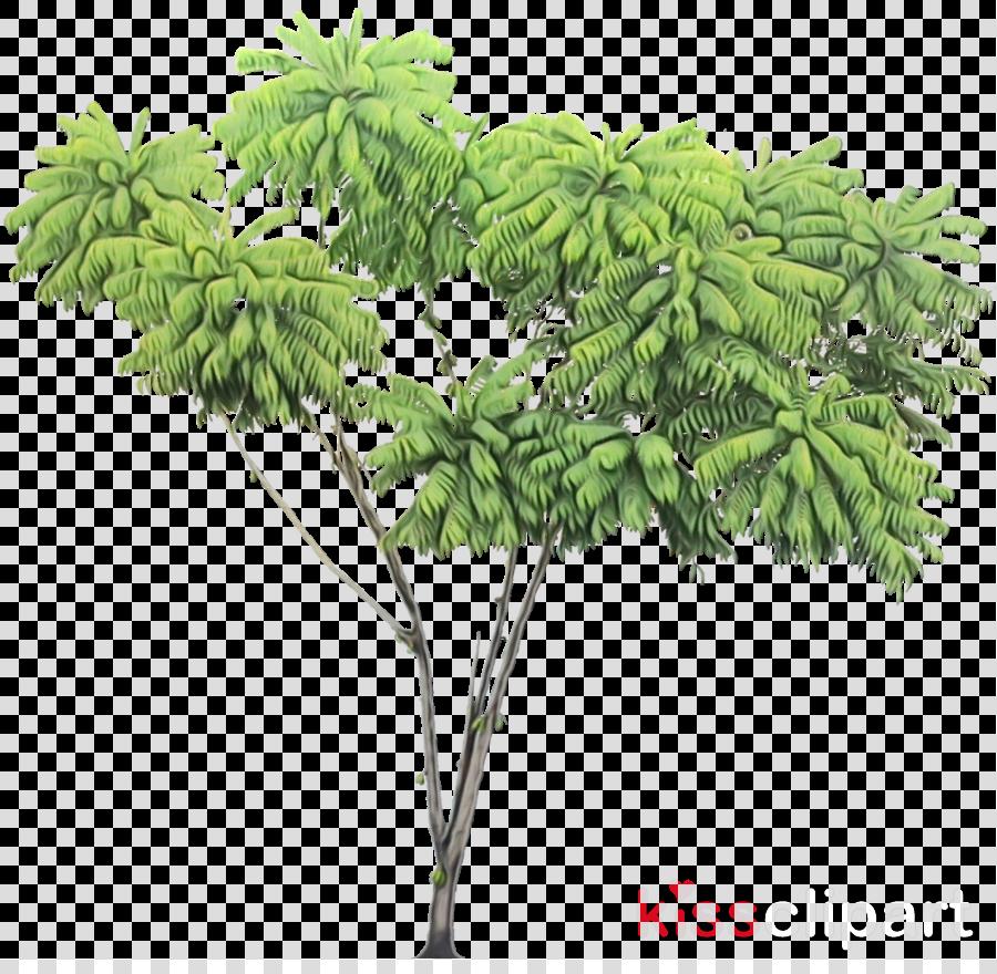 tree plant flower leaf woody plant