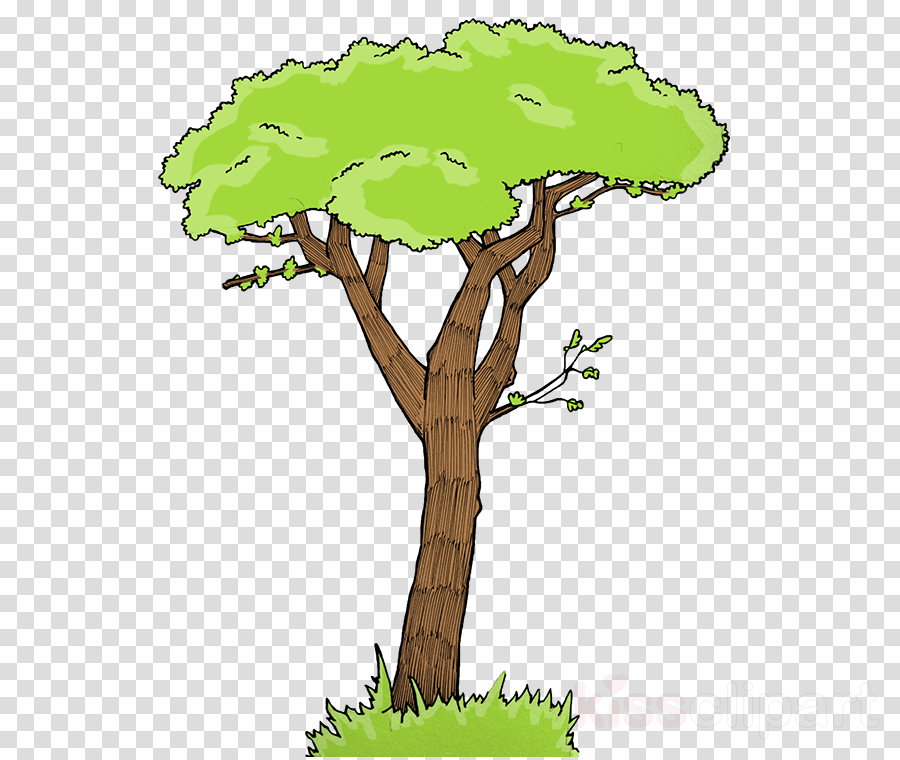 tree green plant leaf flowerpot