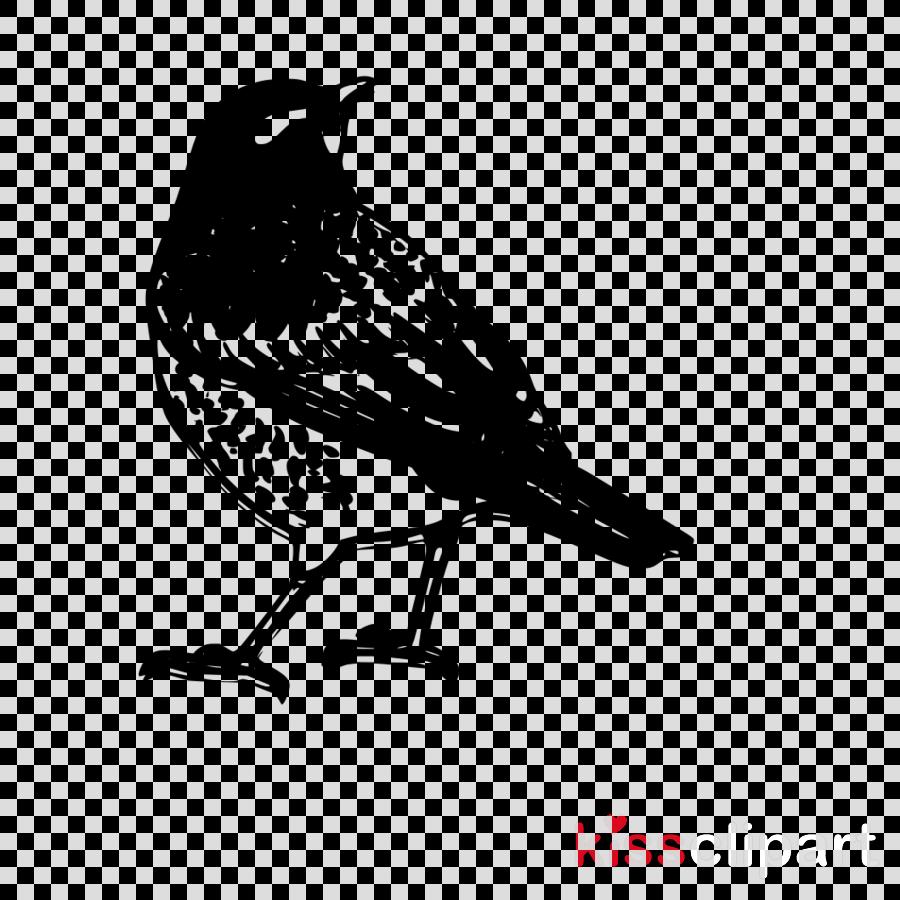 bird beak perching bird songbird sparrow