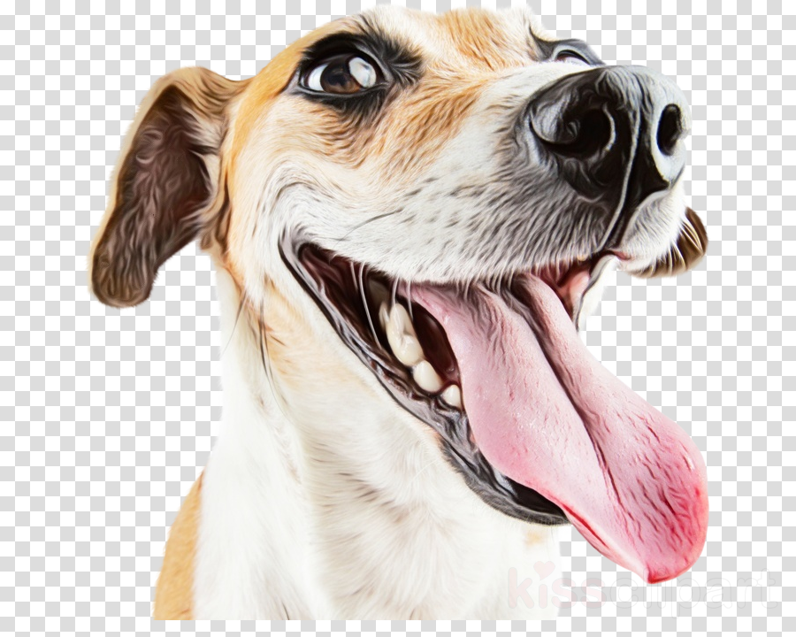 dog snout companion dog head nose