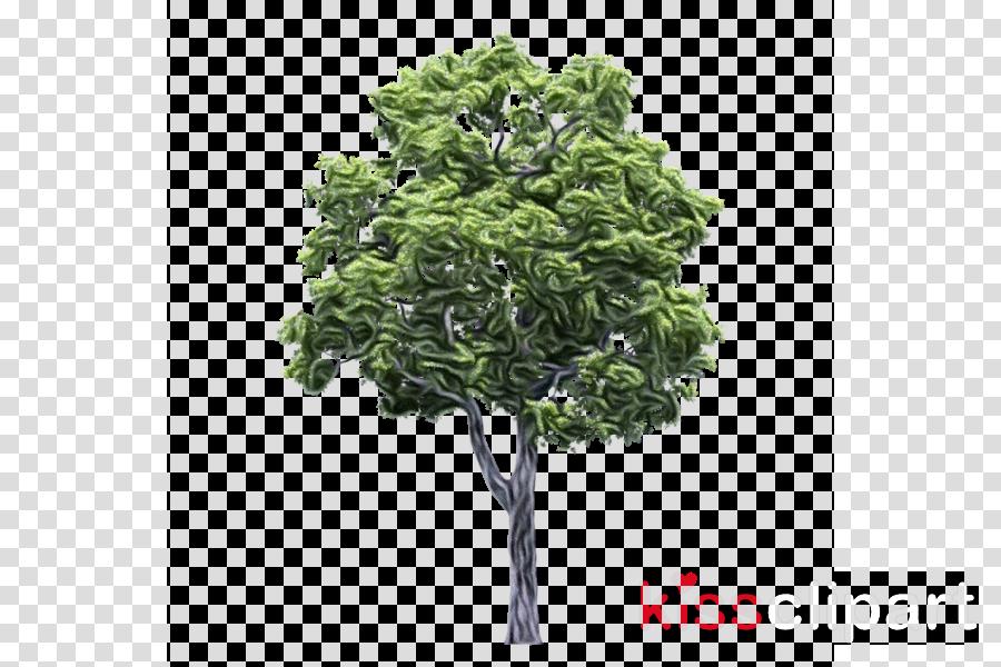 tree plant leaf woody plant flower