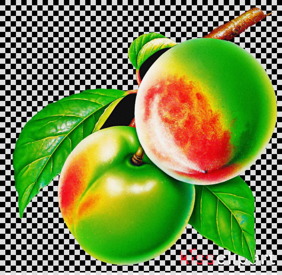 european plum fruit plant leaf food