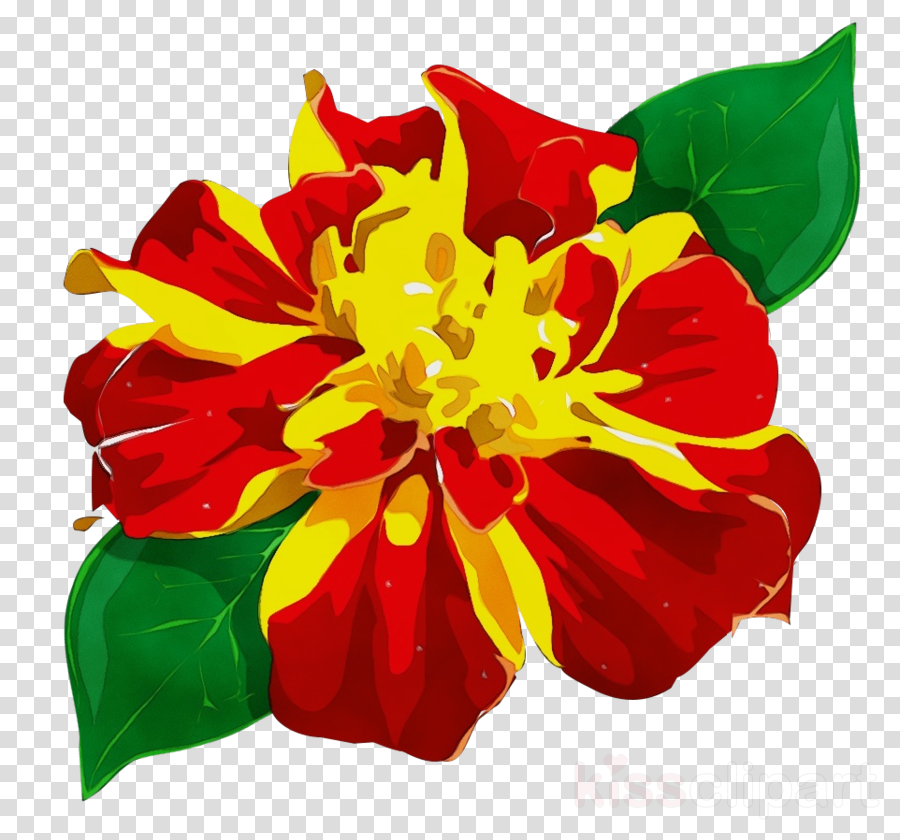 red flower petal plant yellow