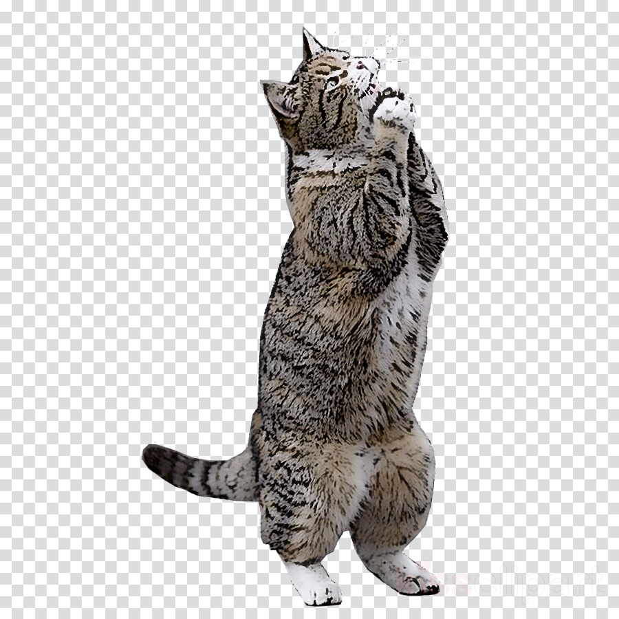 cat small to medium-sized cats wild cat european shorthair whiskers