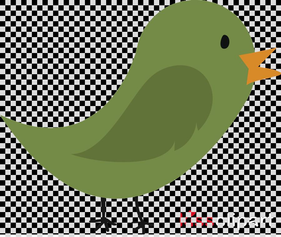 bird beak green finch old world flycatcher