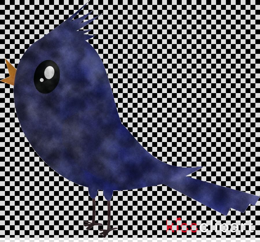 bird beak perching bird songbird raven