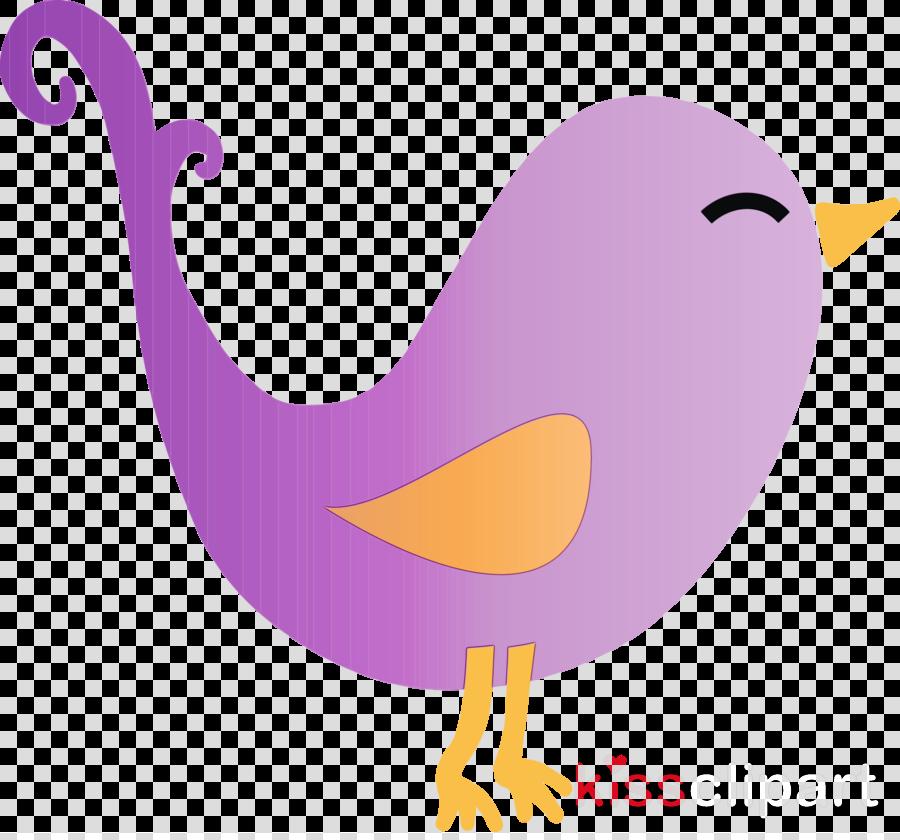 bird purple violet beak water bird