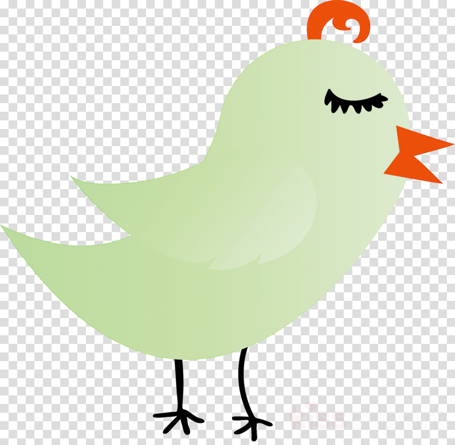 bird beak chicken rooster
