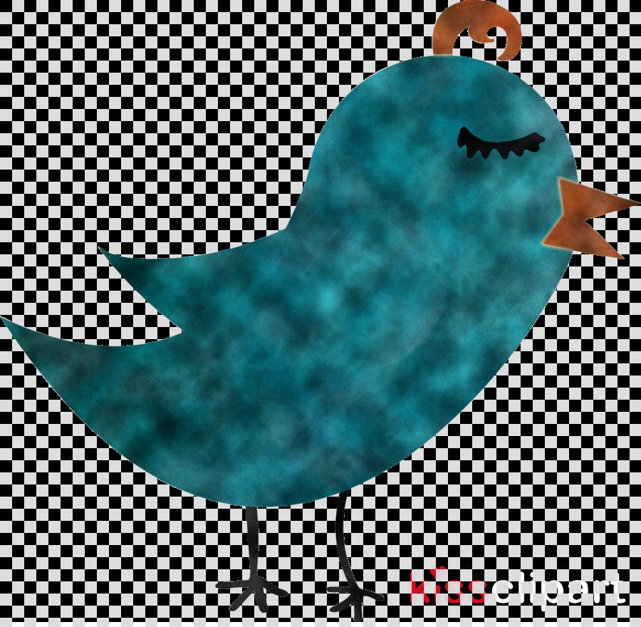 bird turquoise turquoise beak wren