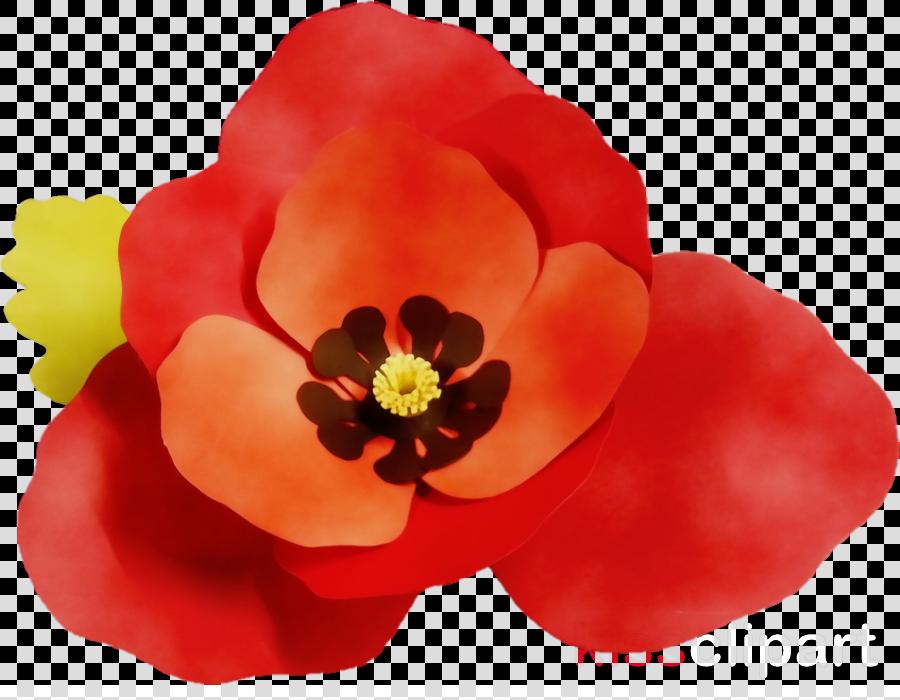 petal flower red plant poppy family