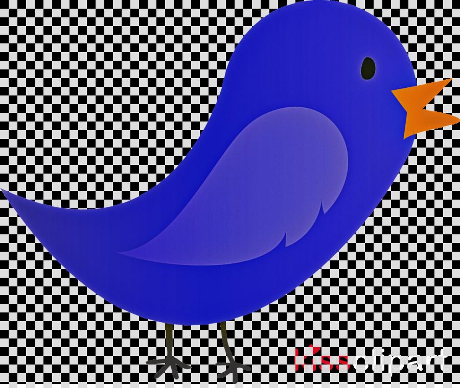 bird beak songbird perching bird bluebird