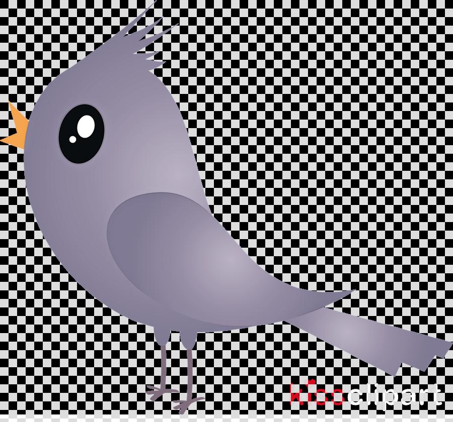 bird cartoon beak rock dove cockatiel