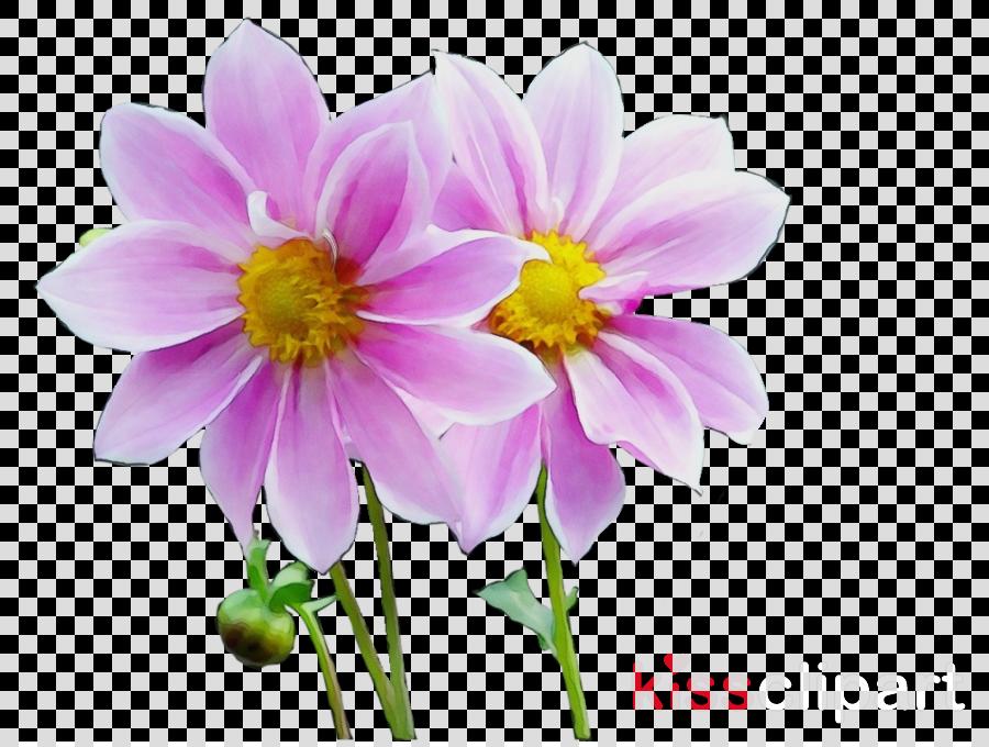 flower petal plant pink wildflower