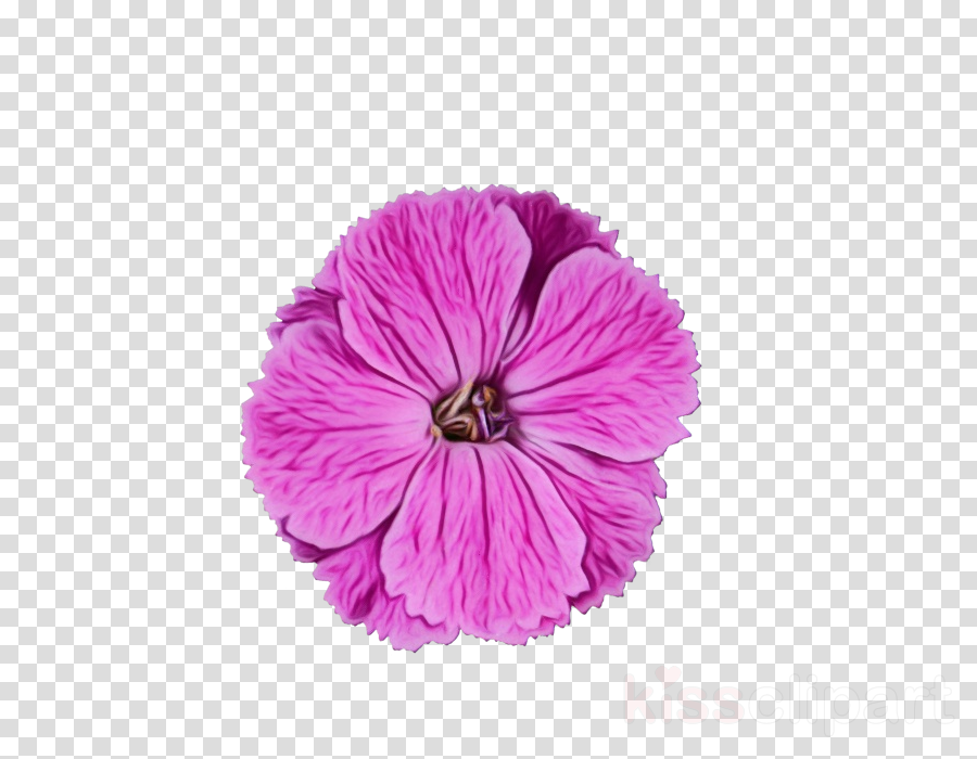 flower petal violet pink purple