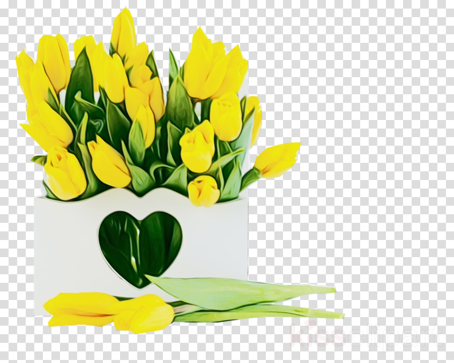 flower yellow cut flowers plant tulip