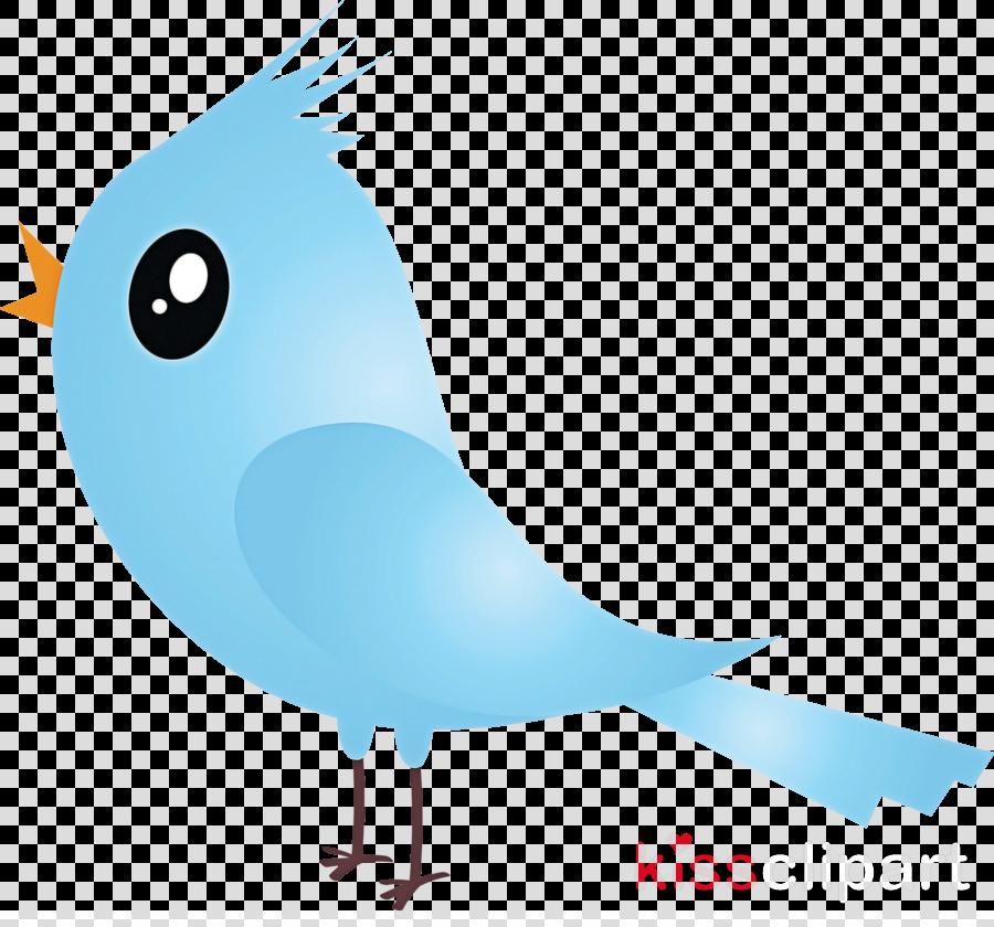 bird beak cartoon tail perching bird