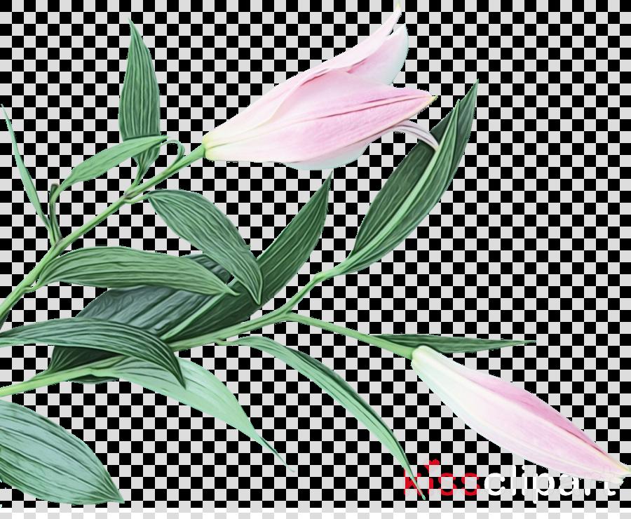 flower plant leaf petal pedicel