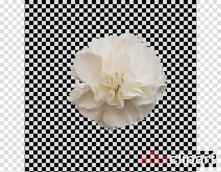 white petal flower plant cut flowers