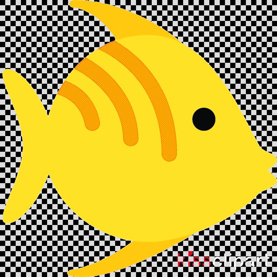 fish fish yellow fin pomacanthidae
