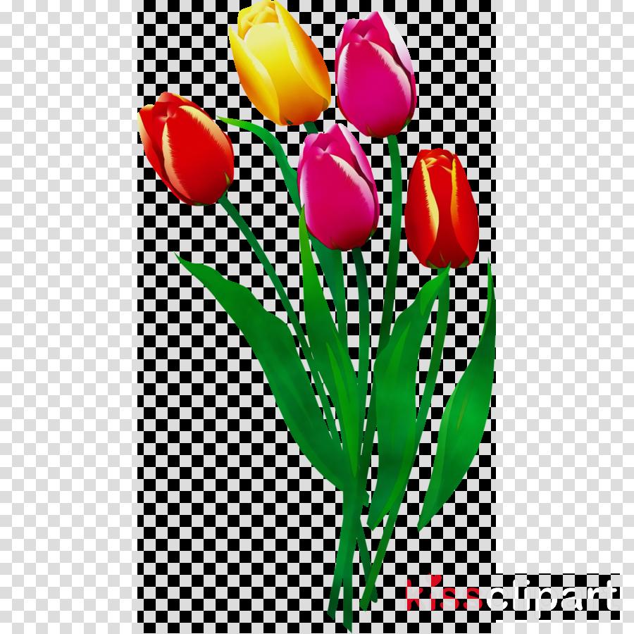 tulip flower petal cut flowers plant