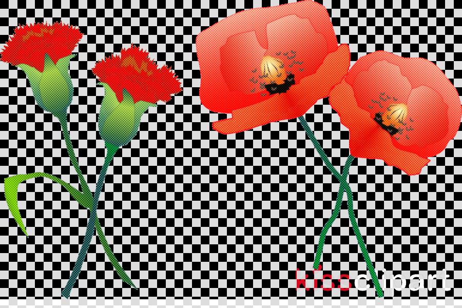 flower red plant petal cut flowers