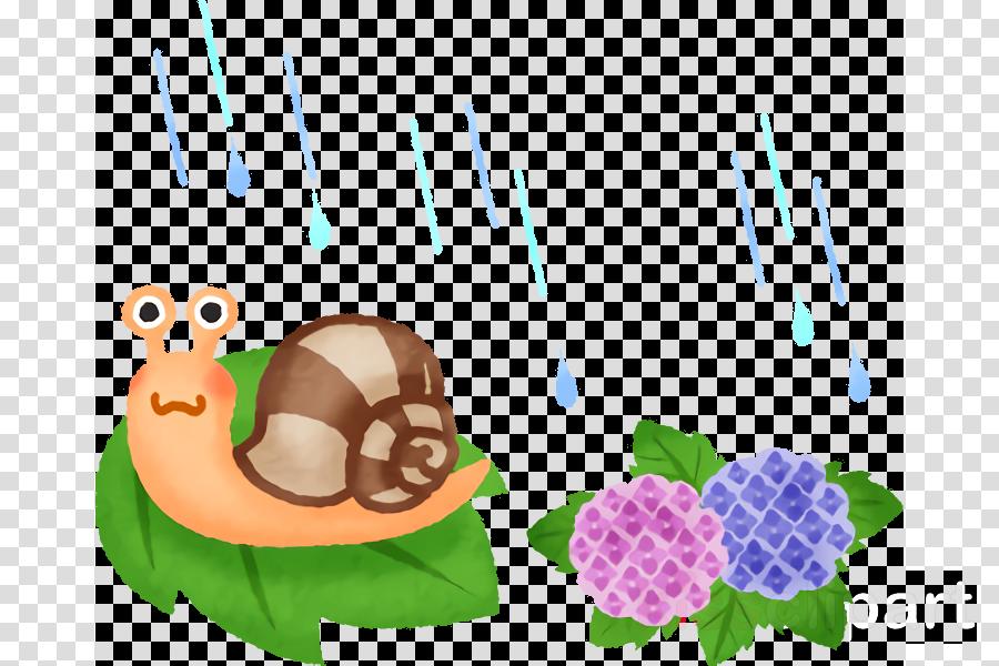tortoise snail snails and slugs turtle sea snail
