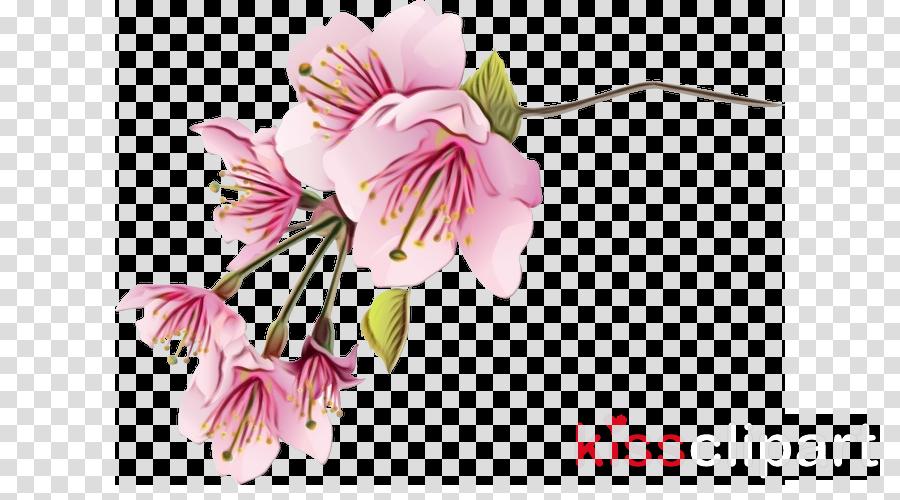 flower petal plant pink peruvian lily